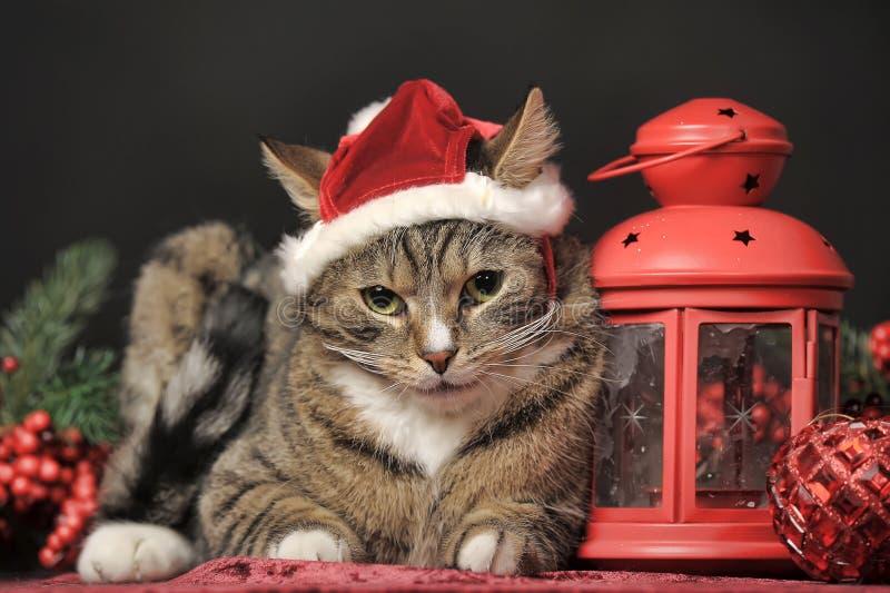 Gato de gato malhado em um chapéu do Natal foto de stock