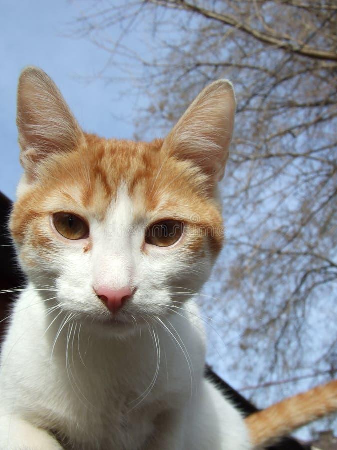 Gato estranho fotografia de stock