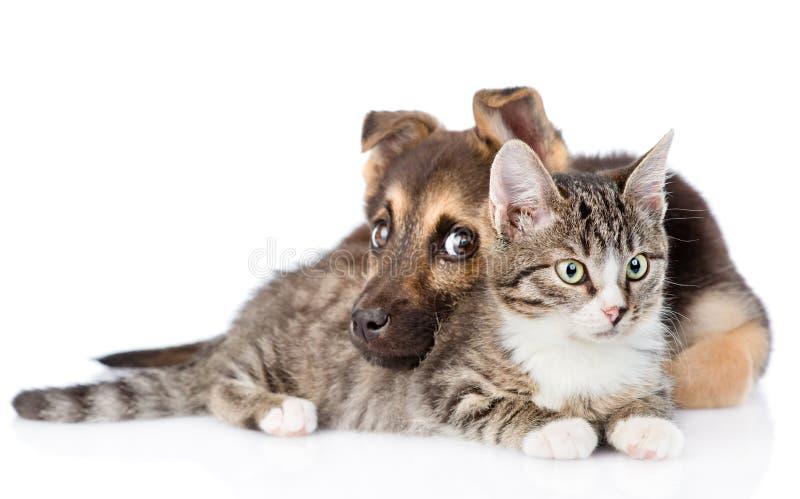 Gato de gato malhado misturado do abraço do cão da raça Isolado no fundo branco foto de stock