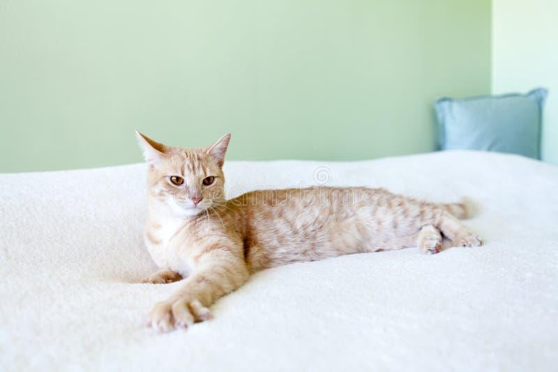 Gato de gato malhado pequeno fotografia de stock royalty free