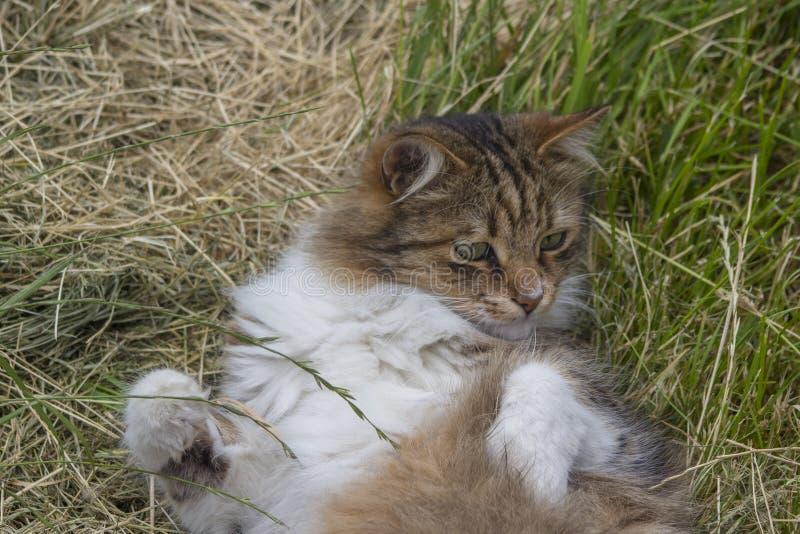 Gato de gramas cortadas no prado imagens de stock royalty free