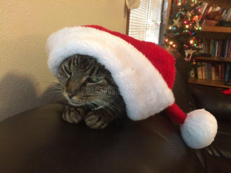 Gato de Grinch imagen de archivo