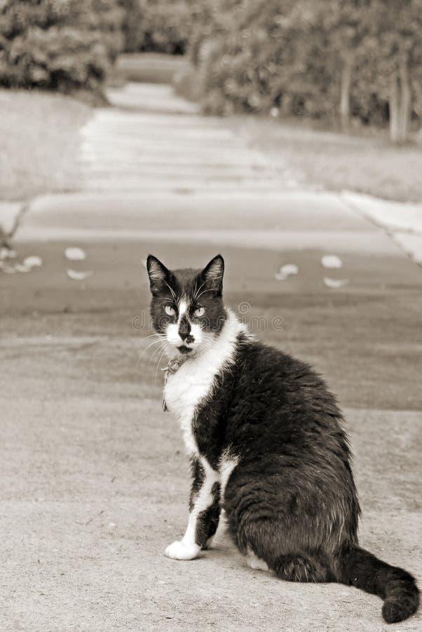 Gato de la acera imagenes de archivo