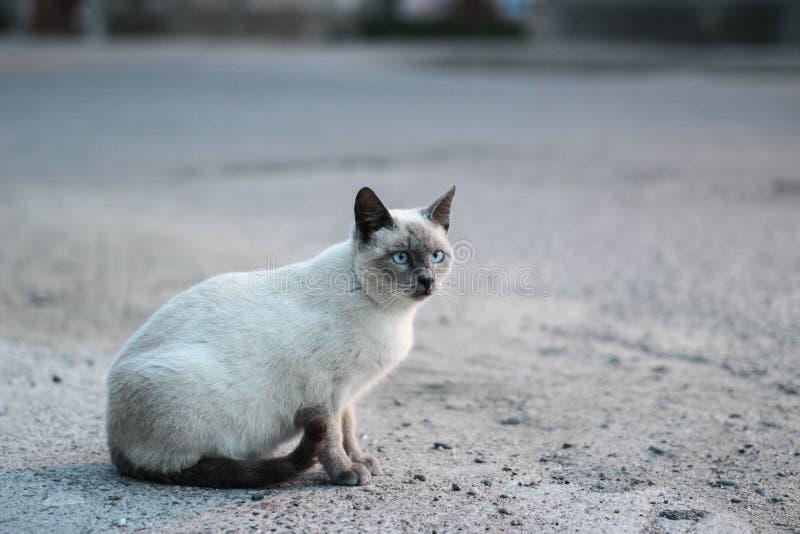 Gato de la calle imagenes de archivo