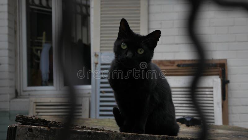 Gato de la calle fotografía de archivo libre de regalías
