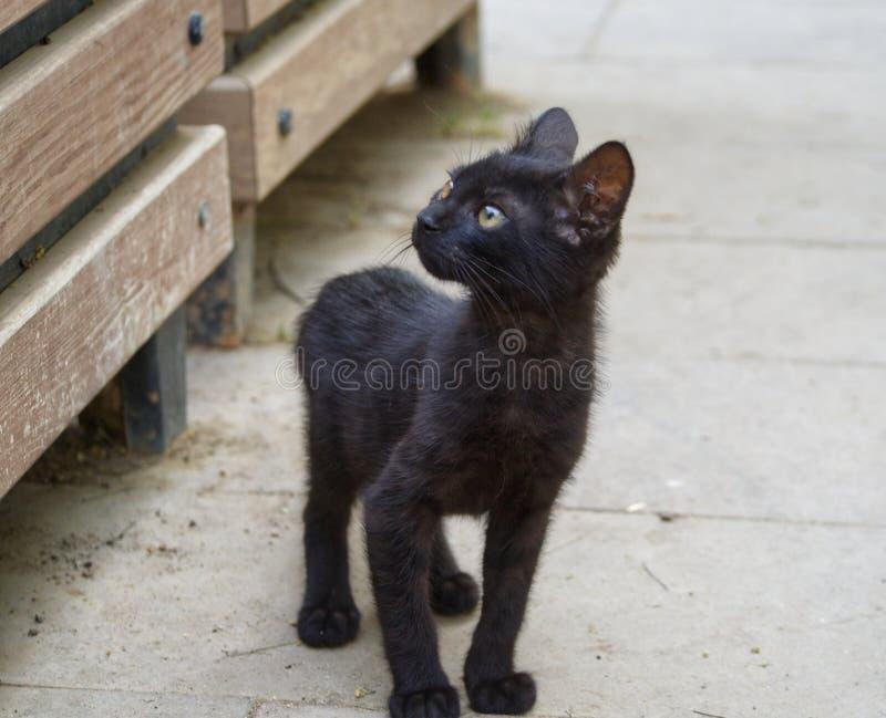 Gato de la calle foto de archivo