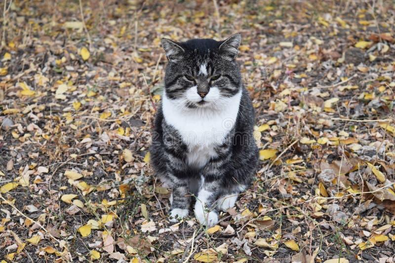 Gato de la calle que se sienta en el follaje y la mirada fotos de archivo libres de regalías