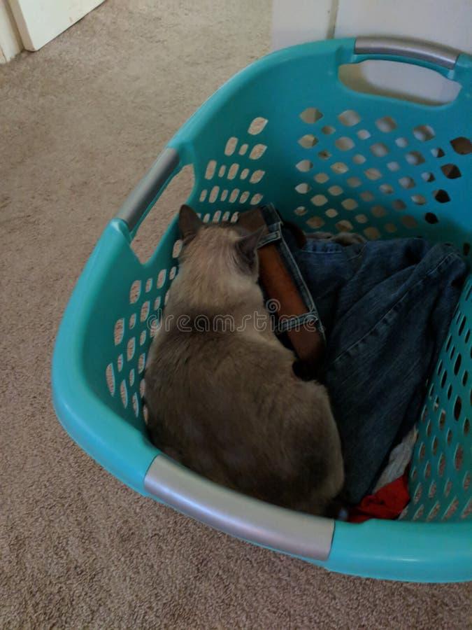 Gato de la cesta de ropa imagen de archivo