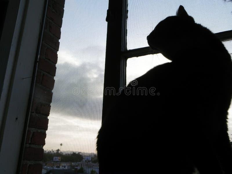 Gato de la ciudad fotos de archivo