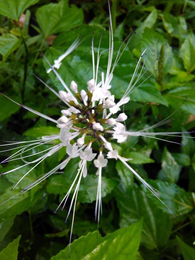 Gato de la flor imagenes de archivo