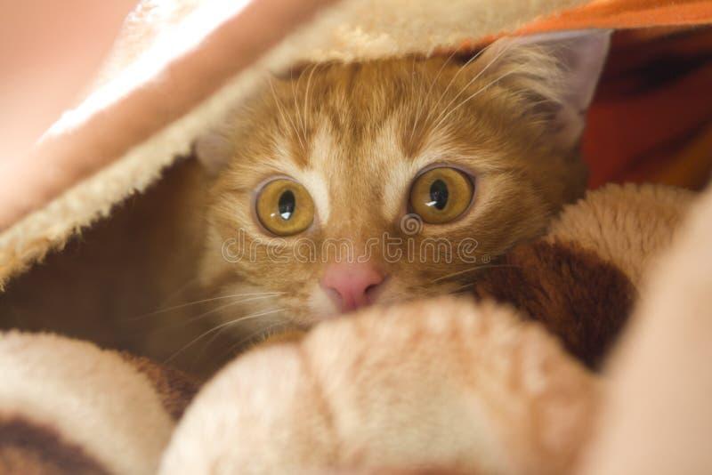 Gato de la maravilla foto de archivo libre de regalías