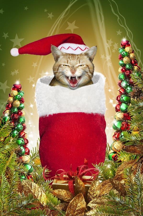 Gato de la media de la Navidad   imagen de archivo