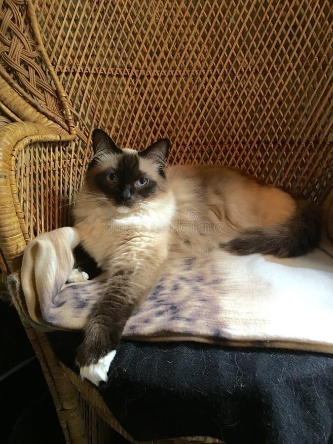 Gato de la muñeca de trapo foto de archivo libre de regalías