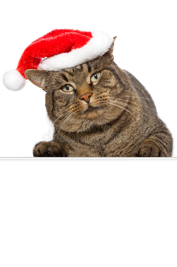Gato de la Navidad. fotografía de archivo