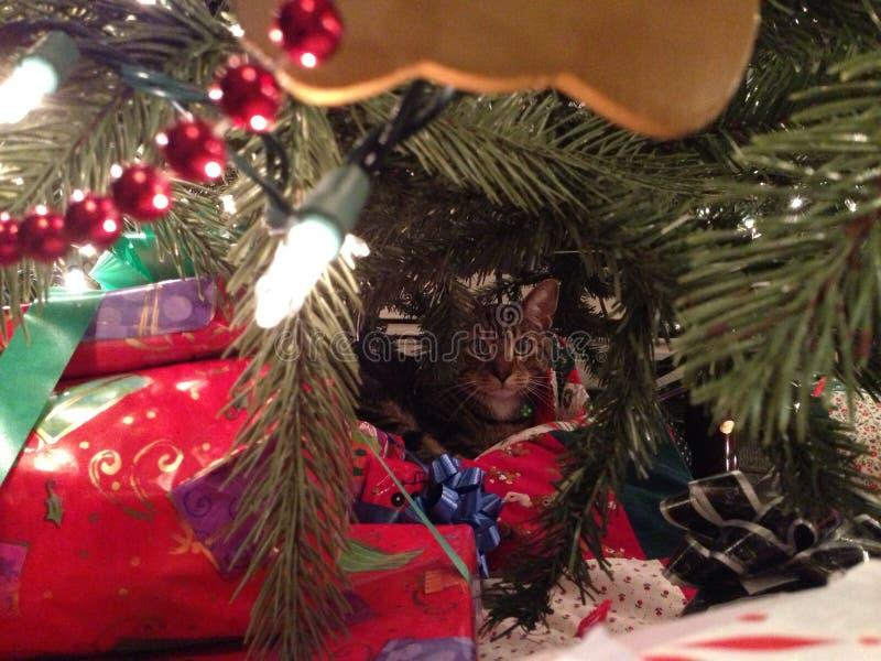 Gato de la Navidad fotografía de archivo libre de regalías