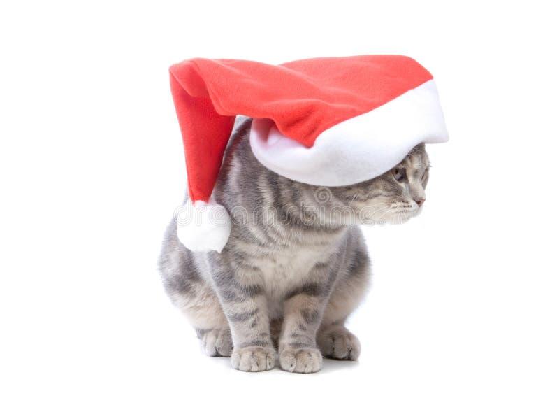Download Gato de la Navidad foto de archivo. Imagen de rojo, mullido - 7284026