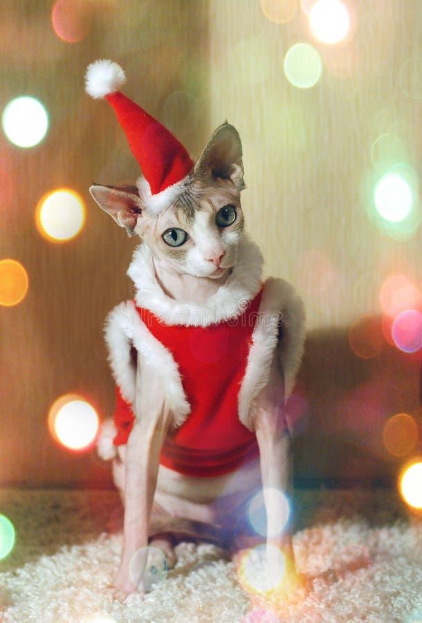 Gato de la Navidad en el traje de Papá Noel, ropa roja El gato del A?o Nuevo imagen de archivo