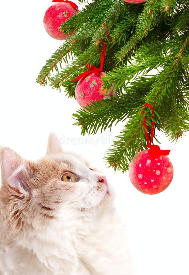 Gato de la Navidad entre un piel-árbol foto de archivo