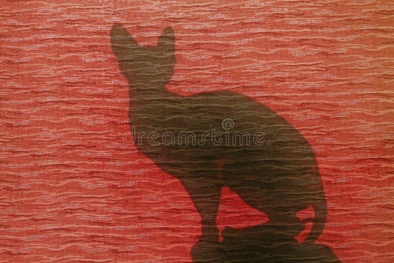 Gato de la silueta en la ventana roja fotografía de archivo libre de regalías