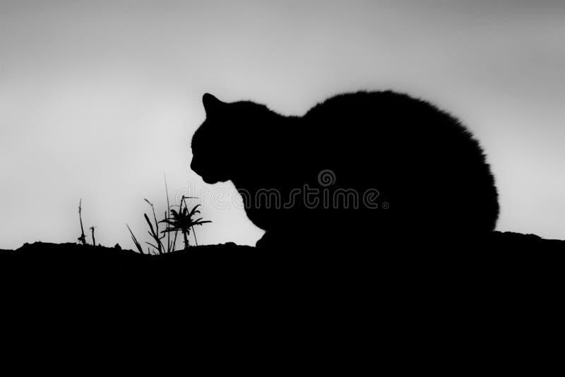 Gato de la sombra foto de archivo libre de regalías