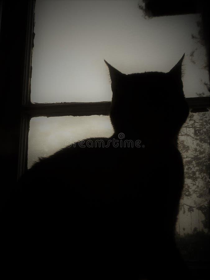 Gato de la sombra fotos de archivo