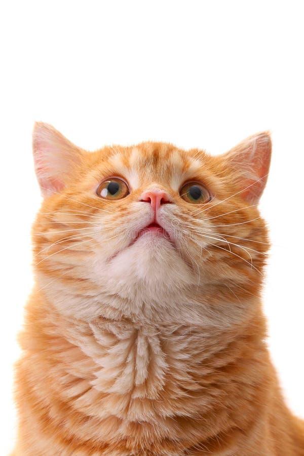 Gato de la sorpresa que mira para arriba imagenes de archivo