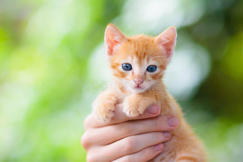 Gato de la tenencia del hombre Gatito del bebé en manos humanas fotos de archivo libres de regalías