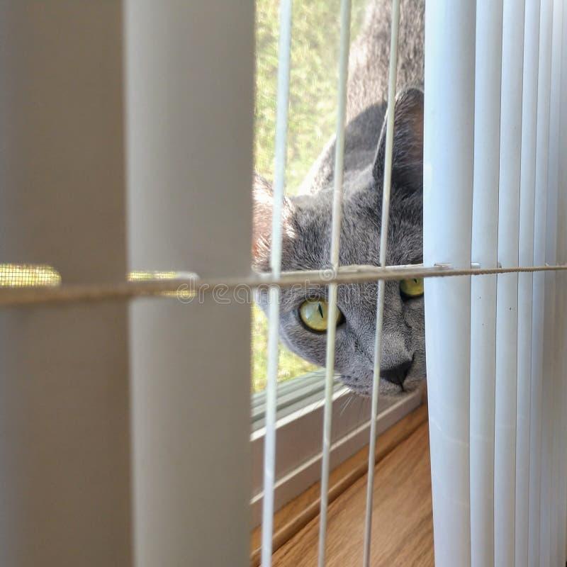 Gato de la ventana foto de archivo