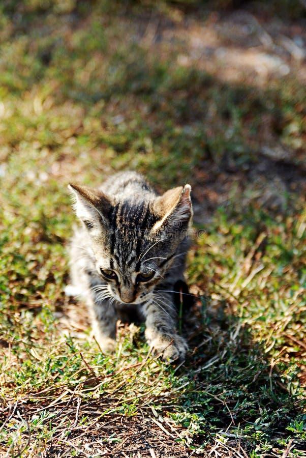 Gato de Litle imagen de archivo