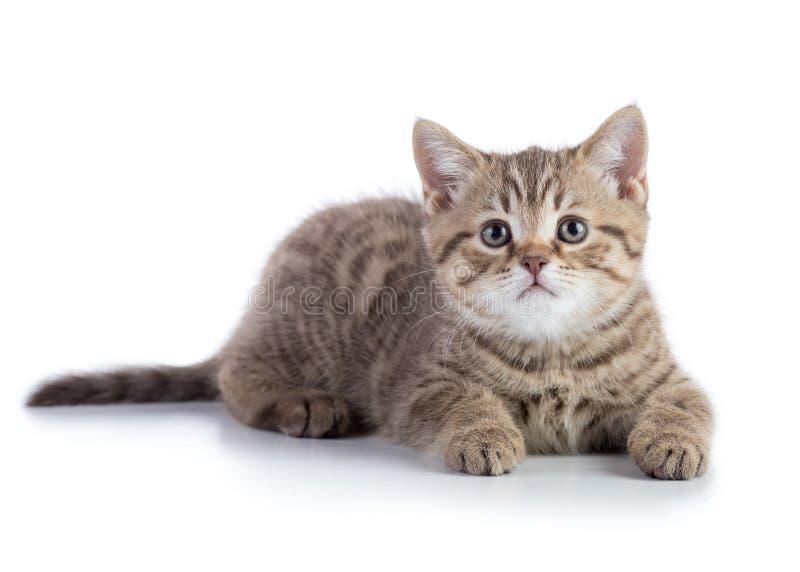 Gato de mentira del gatito aislado foto de archivo libre de regalías