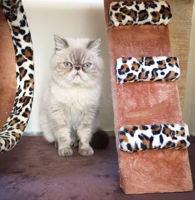 gato de para del gimnasio imagen de archivo libre de regalías