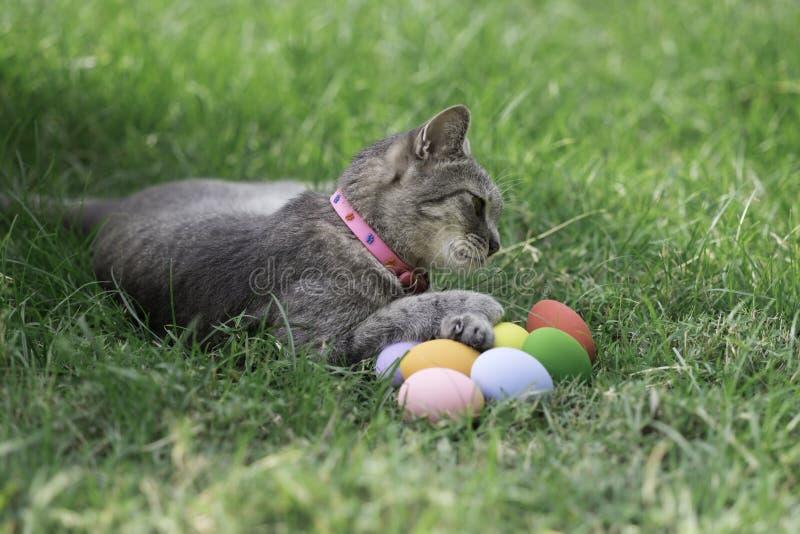 Gato de Pascua con los huevos coloridos foto de archivo