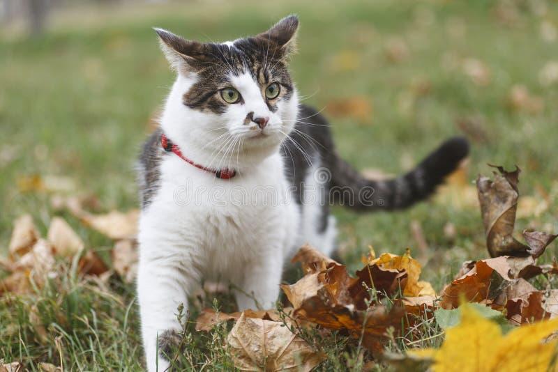 Gato de passeio fotografia de stock