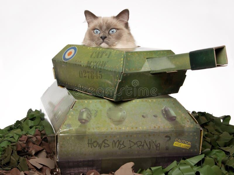 Gato de Ragdoll que senta-se no tanque do brinquedo imagens de stock