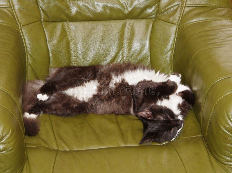 Gato de reclinación foto de archivo libre de regalías