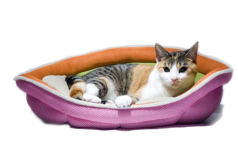 Gato de reclinación aislado fotos de archivo libres de regalías