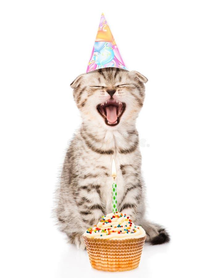 Gato de risa del gato con el sombrero y la torta del cumpleaños Aislado en blanco imagen de archivo libre de regalías