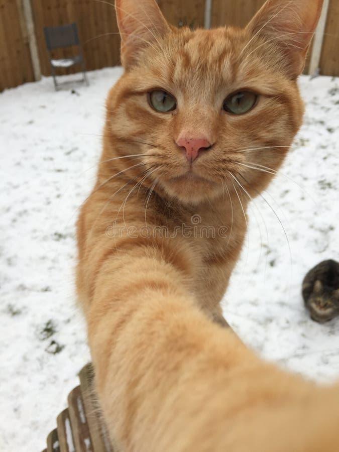 Gato de Romeo en nieve imagen de archivo