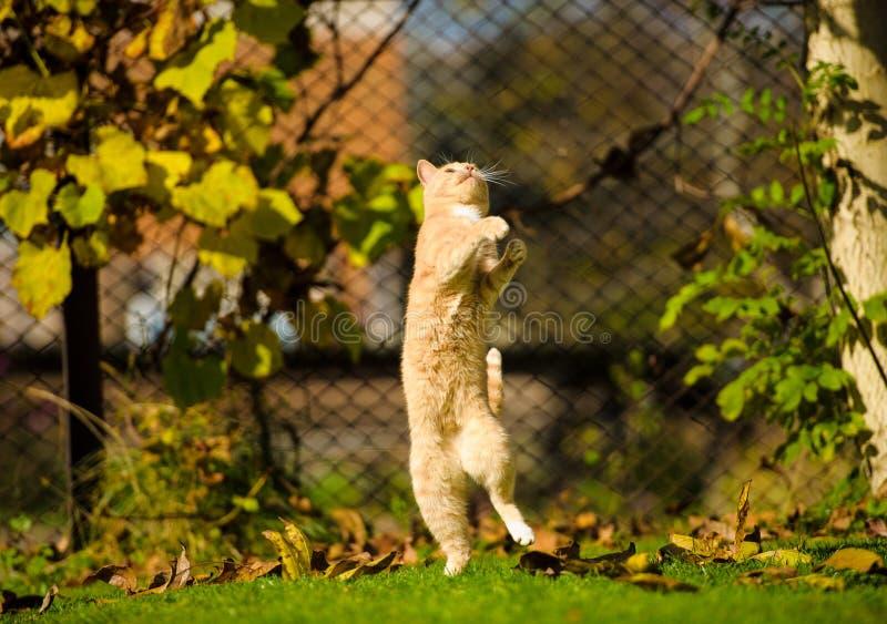 Gato de salto divertido foto de archivo