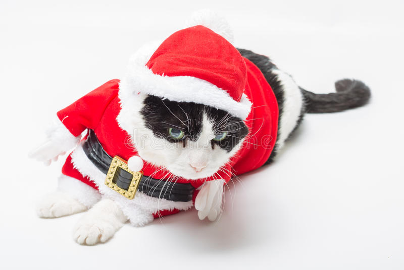 Download Gato de Santa Claus imagem de stock. Imagem de wallpaper - 80102229