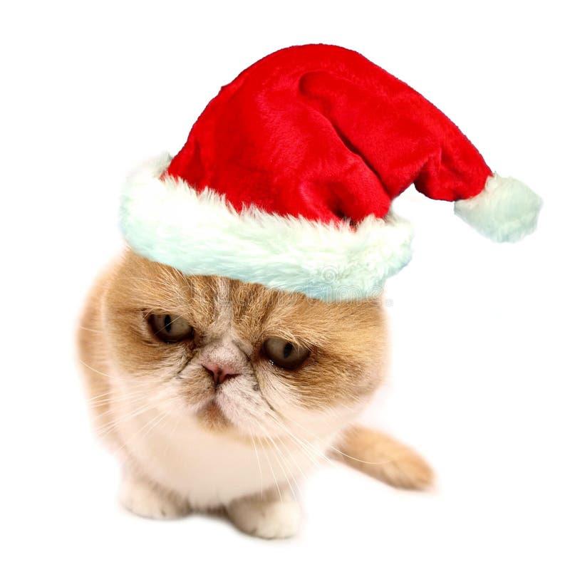 Gato de Santa do Natal imagem de stock