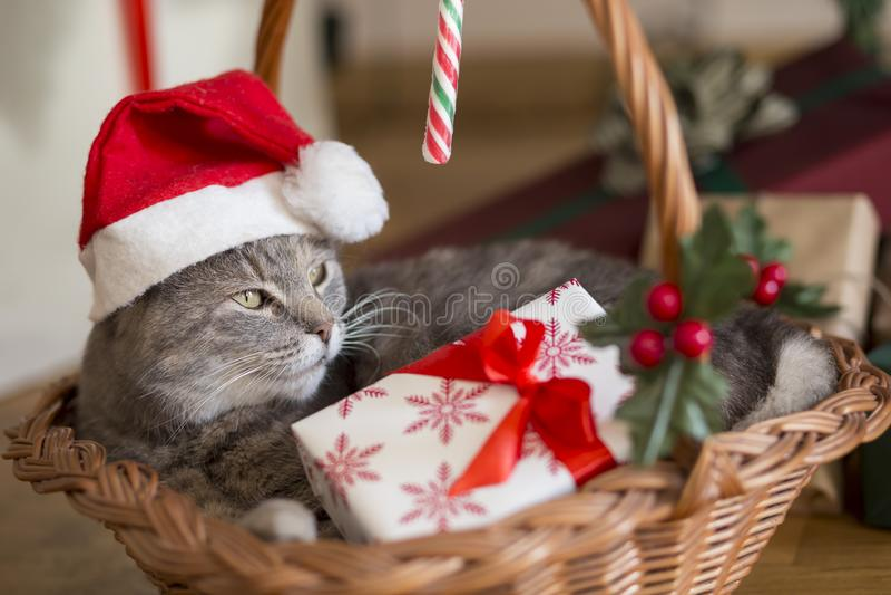 Gato de Santa na cesta fotografia de stock