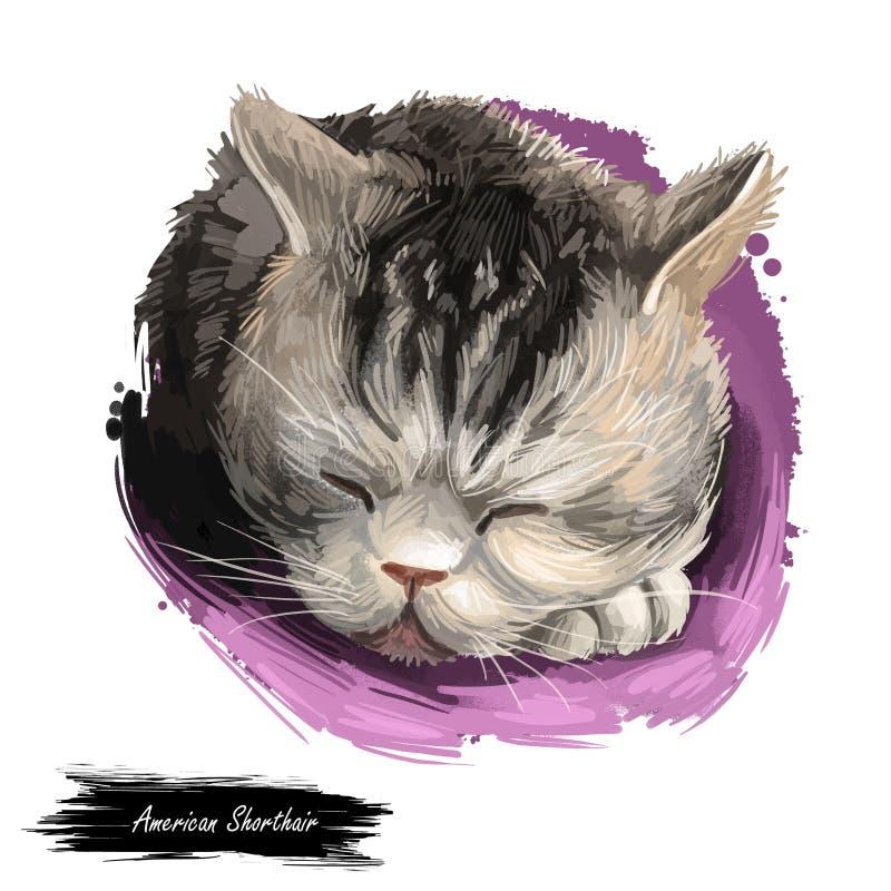 Gato de Shorthair del americano aislado en el fondo blanco Ejemplo del arte de Digitaces del gatito exhausto de la mano para la w stock de ilustración