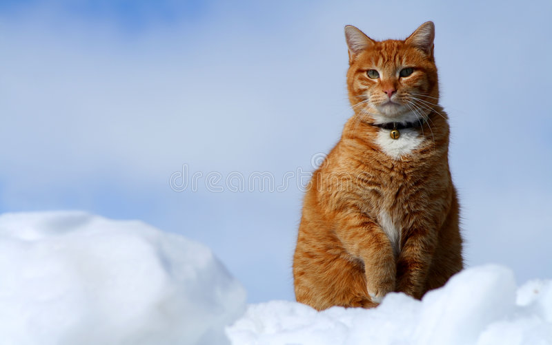Gato de Tabby amarelo que olha 14 foto de stock