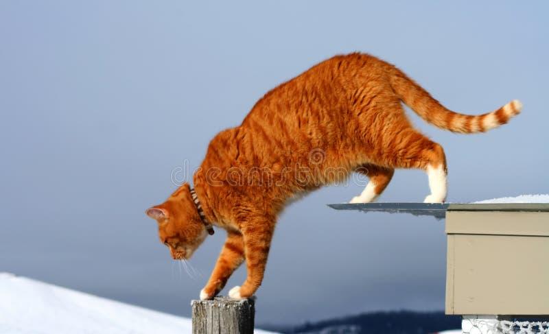 Gato de Tabby amarillo que ronda imagen de archivo