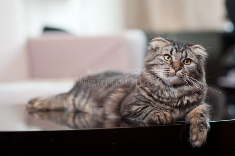 Gato de tabby bonito fotos de stock