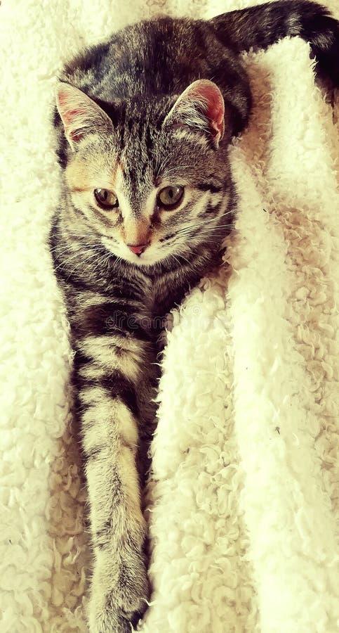 Gato de tabby bonito foto de stock royalty free