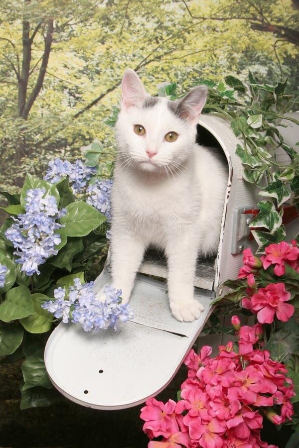 Gato de Tabby branco em uma caixa postal imagem de stock royalty free