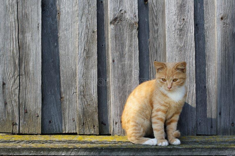 Gato de tabby del jengibre foto de archivo libre de regalías