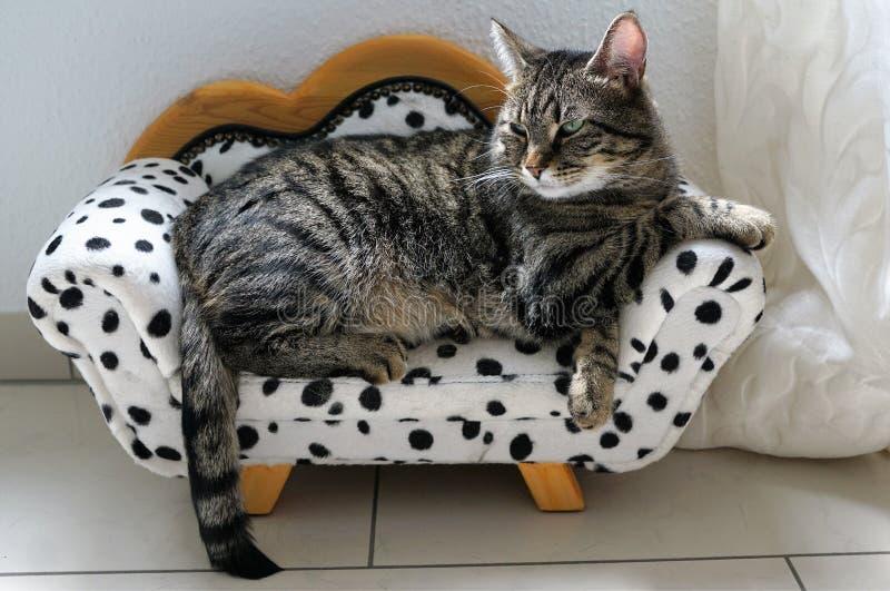 Gato de tigre cansado en un sofá dálmata imagen de archivo libre de regalías